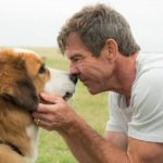 Cliches And Sentimentality Hound 'A Dog's Purpose'